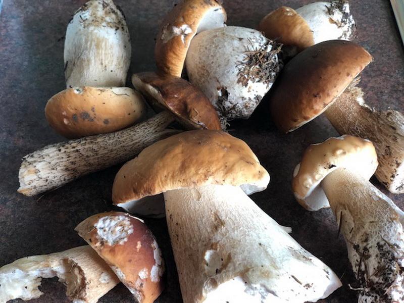 Маринованные грибочки на зиму. Моё «грибное золотое сечение» или выверенные годами пропорции для маринада